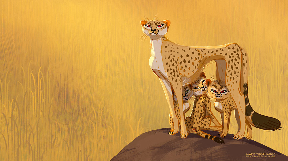 Marie-Thorhauge_2018_Cheetahs_03-illustration_sml.jpg