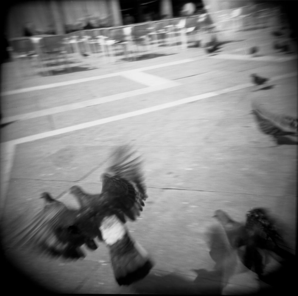 Pigeon_#_2.jpg