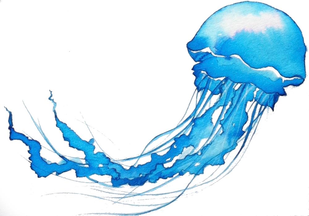 Jellyfish_synaesthesia_mag.jpg
