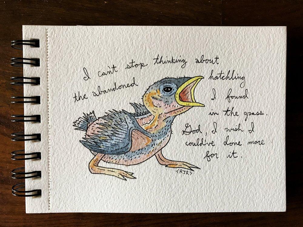 bird (1).jpeg