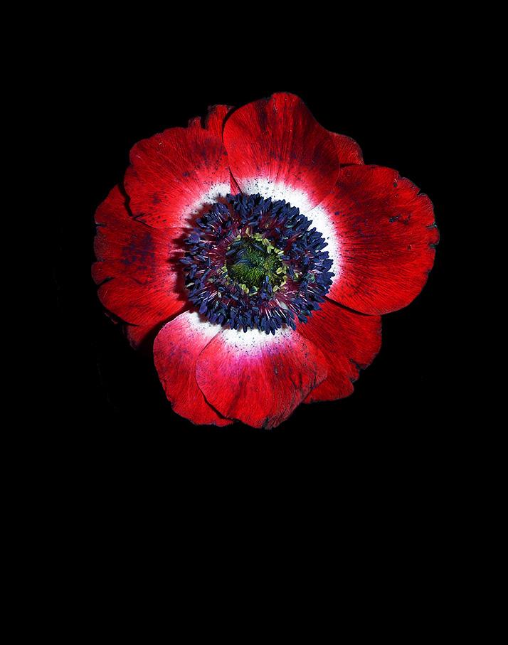 Poppy©StudioAnkaBardeleben40596.jpg