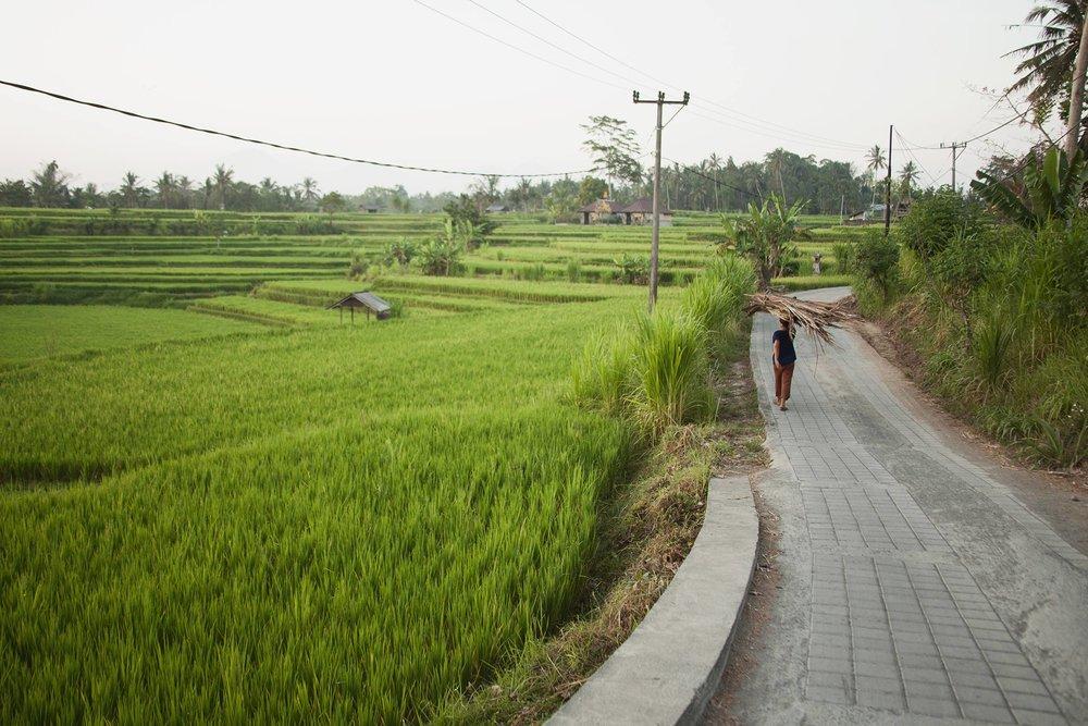50_Ubud_Bali_Indonesia.jpg