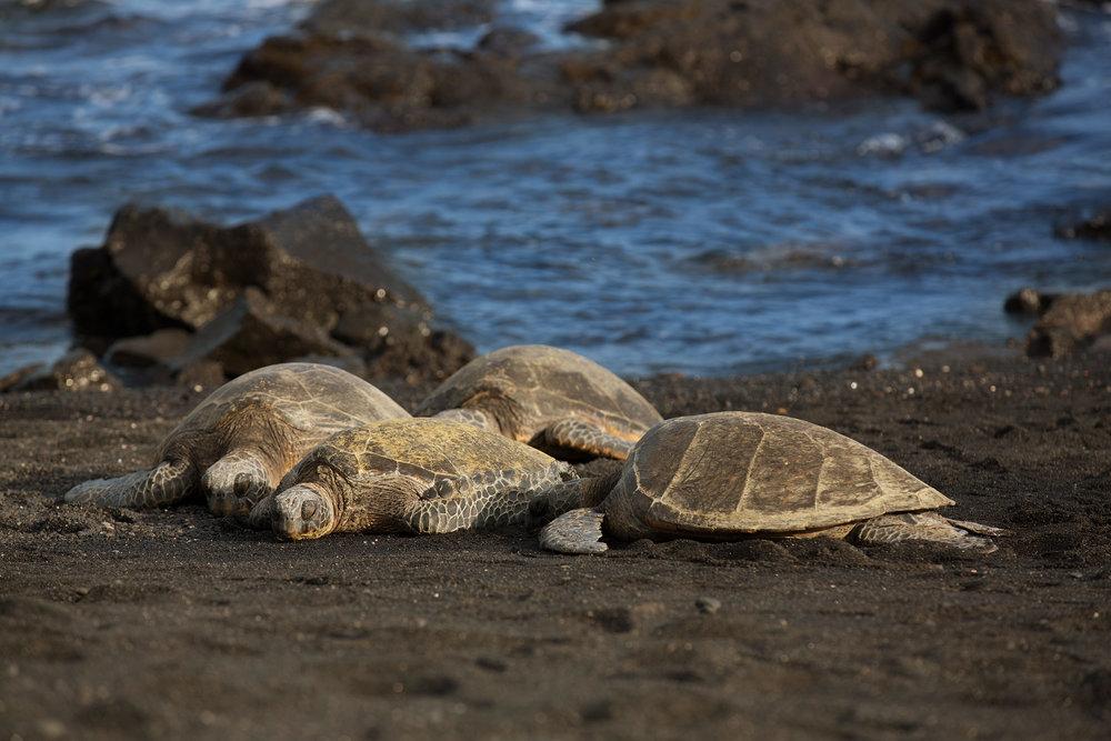 12_Hawaii.jpg
