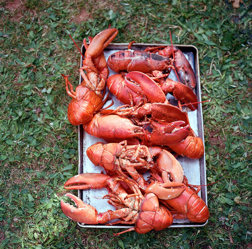 PrinceEdwardIsland_Lobsters_SonyaYruel.jpg