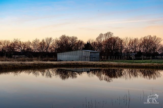 Moose Ranch. #ranch #farm #sheep #stolenmoosephotography #farmlife #sunset #water #waterreflection