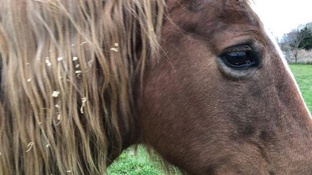 Good girl. #horse #ilovemyhorse #mane #stolenmooseranch