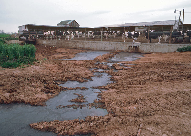 The proposed changes include new restrictions aimed at keeping manure and other nutrients away from direct conduits to groundwater, while allowing farmers to choose conservation practices that are appropriate for their operations, and still protect resources
