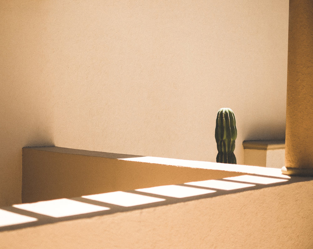 cabo-cactus-1-4.jpg