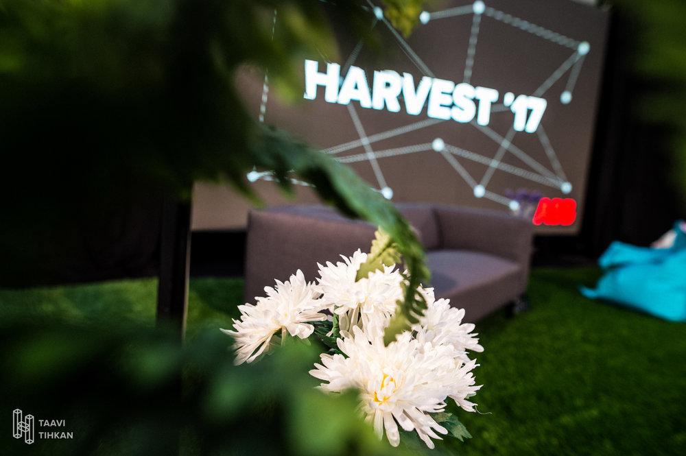 harvest_21.jpg