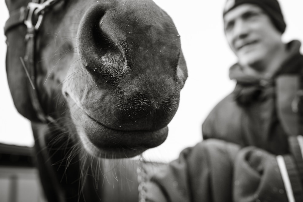 Day in the Life Photography | Race Horse Anwar Hanover & Frank Kamine | Campbell Kamine Photography-18.jpg