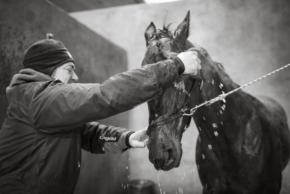 Day in the Life Photography | Race Horse Anwar Hanover & Frank Kamine | Campbell Kamine Photography-27.jpg