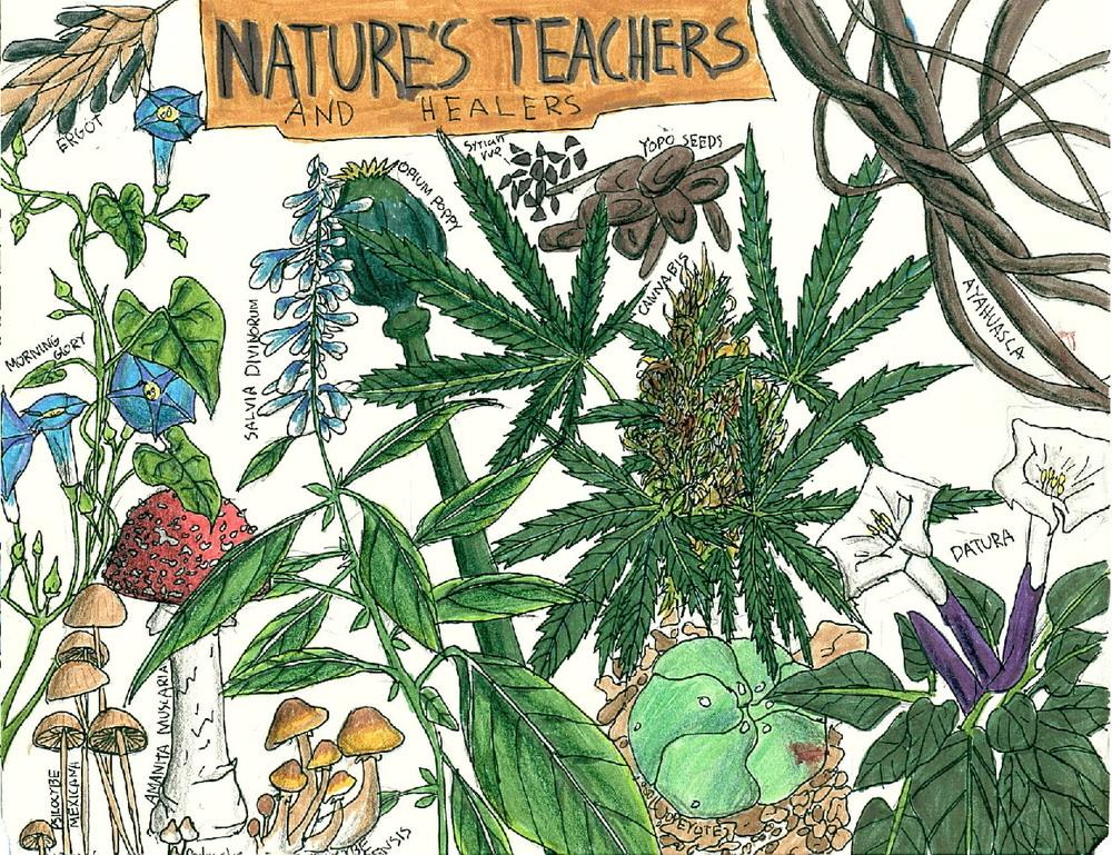 psychedelic-medicine-natures-teachers-healers.jpg