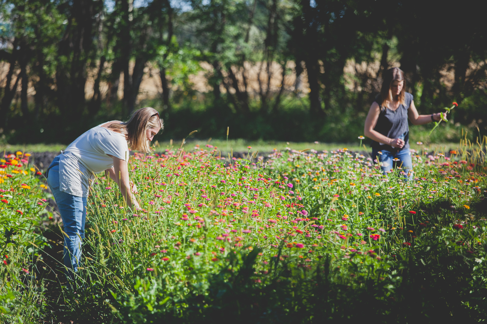 Locally Grown Wedding Flowers - Winnipeg Wedding Flowers