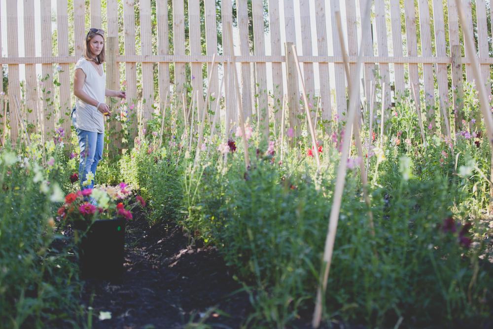 Flower Farming - Winnipeg Wedding Flowers