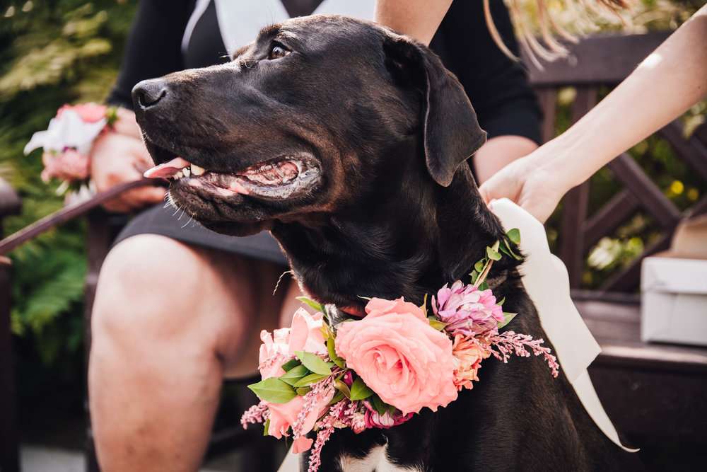 Dog Flower Collar - Wedding Ideas with Dogs
