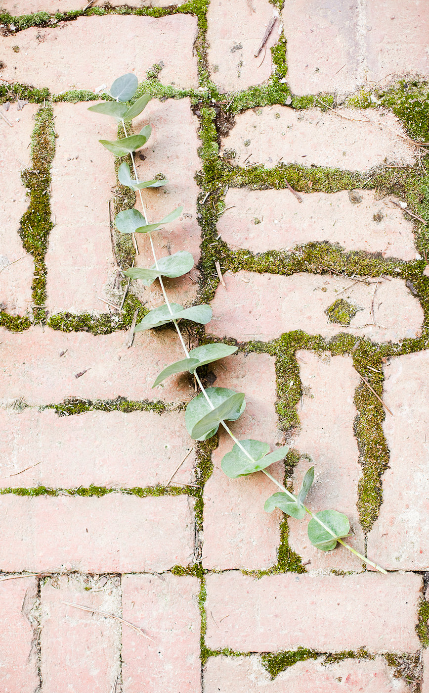 Eucalyptus - Wedding Flower Ideas