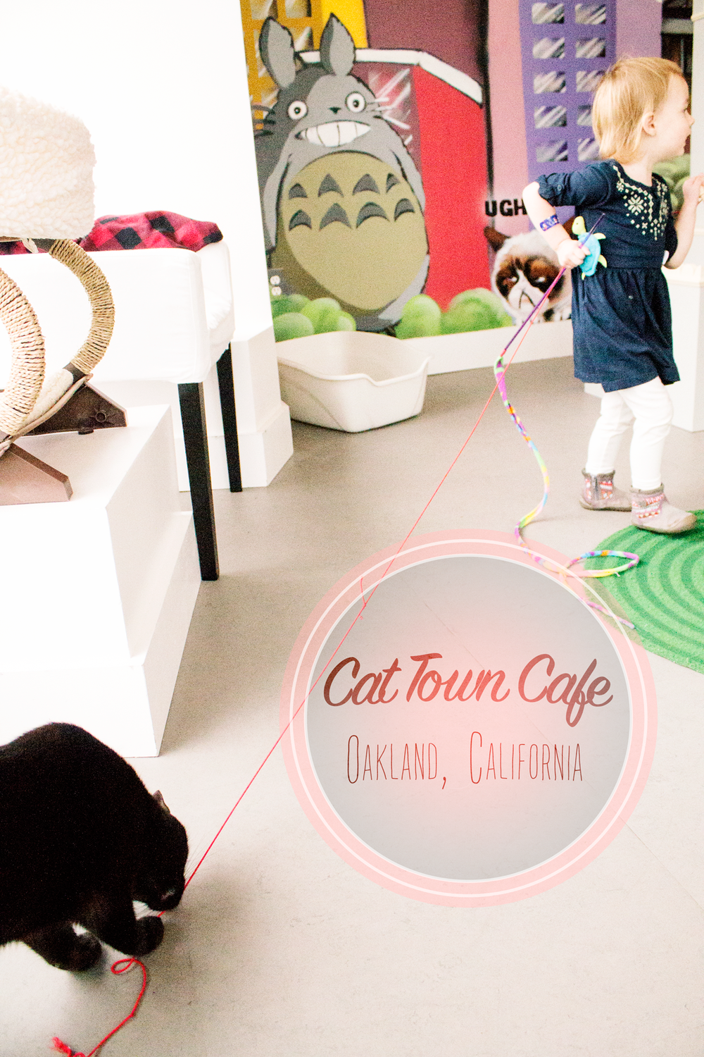 Cat-cafe-oakland-tourist-for-a-day-family-fun