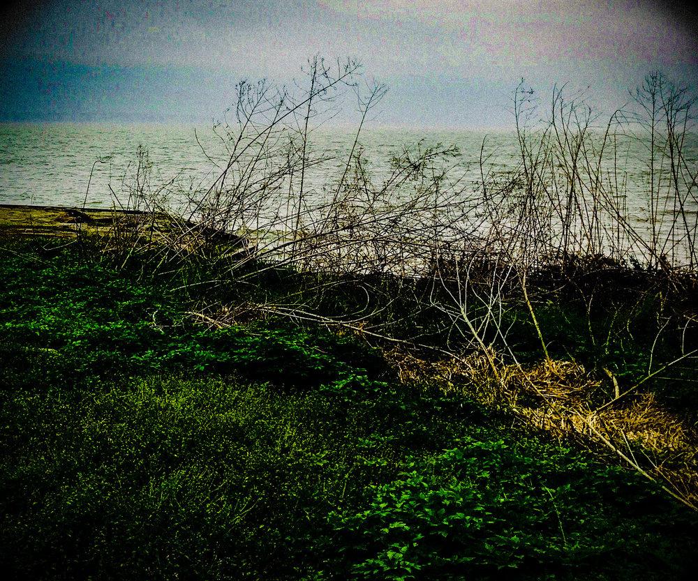 SireniTreat.jpeg