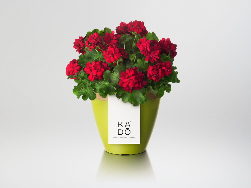 Kado-Pot-Green.jpg