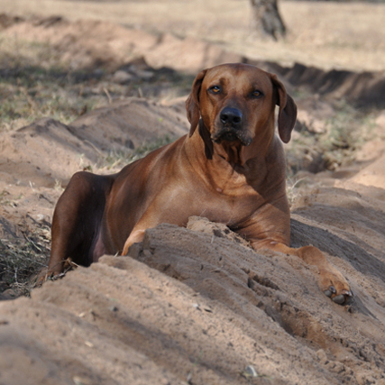 RIP Sweet Dakota -2007-2015