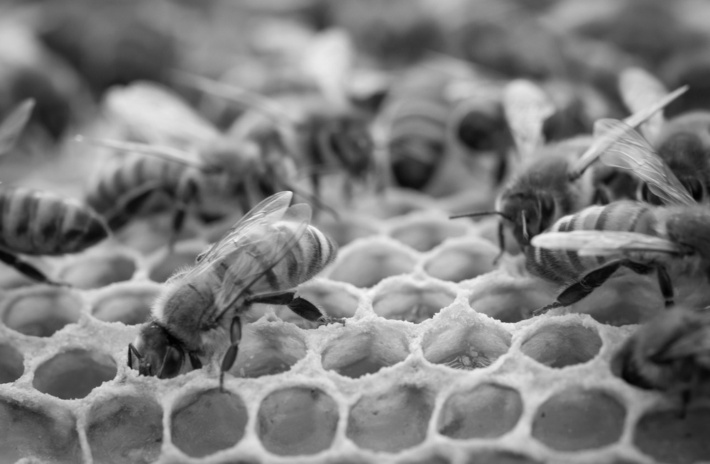 inside-the-bee-hive b&w.jpg
