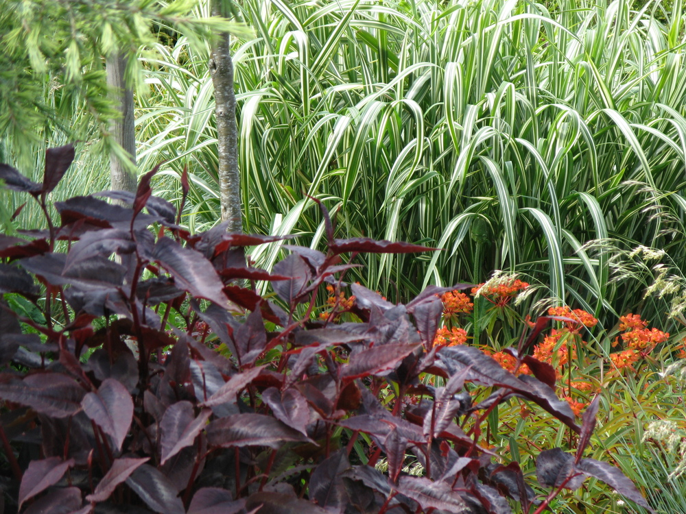 Giant grasses and perennials