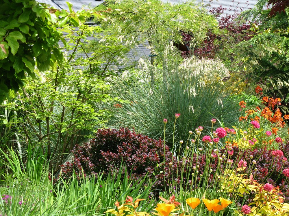 Ornamental grasses and perennials