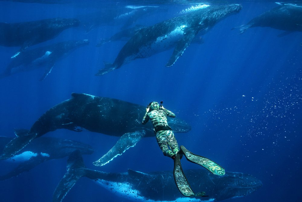 Karim Iliya taking some underwater video of humpbacks on a heat run in Tonga.