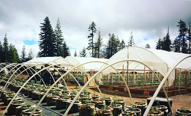 Ramping up for the season #cannabis #farmer #cultivate #ideas #humboldt #permited #weed #grower #lifetime #alltime #bestinshow #showoff #culture #womenfarmers #queerfarmers