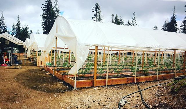 Our greenhouses #greenhouse #pvc #soilbeds #woven #12mm #greenie #spring #rampup #canabis #humboldt #grow #cultivate #culture #blackfirfarms