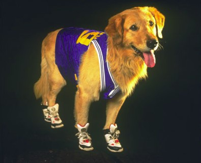 (Not even you, Air Bud)