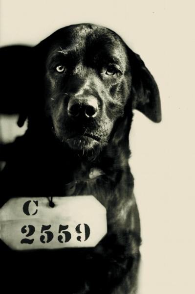 Pep: bad dog                        (ESP website)