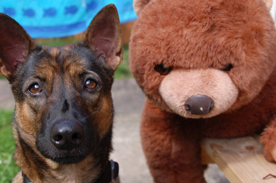 #2! - *All* the feels! This dog is too dumb to know that his bear isn't real.