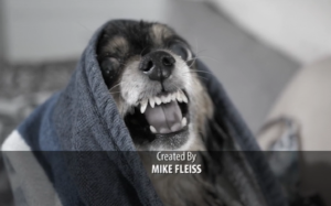 (Always a please, Mike Fleiss)