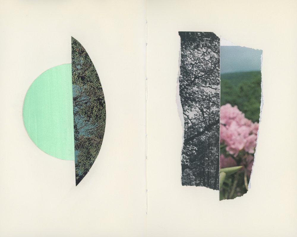 Flora Fragments