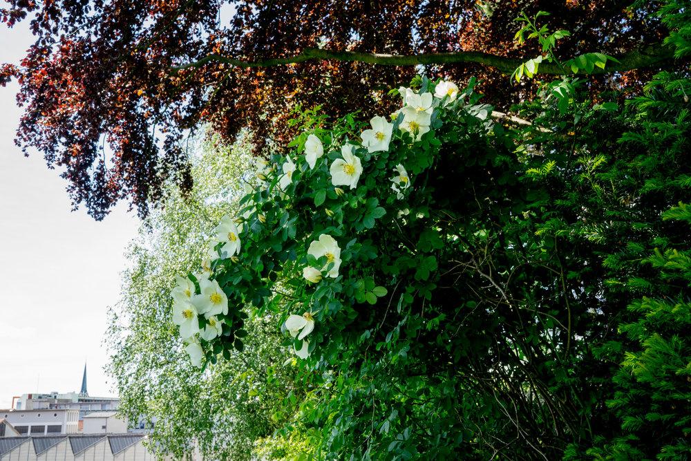 'Frühlingsanfang'
