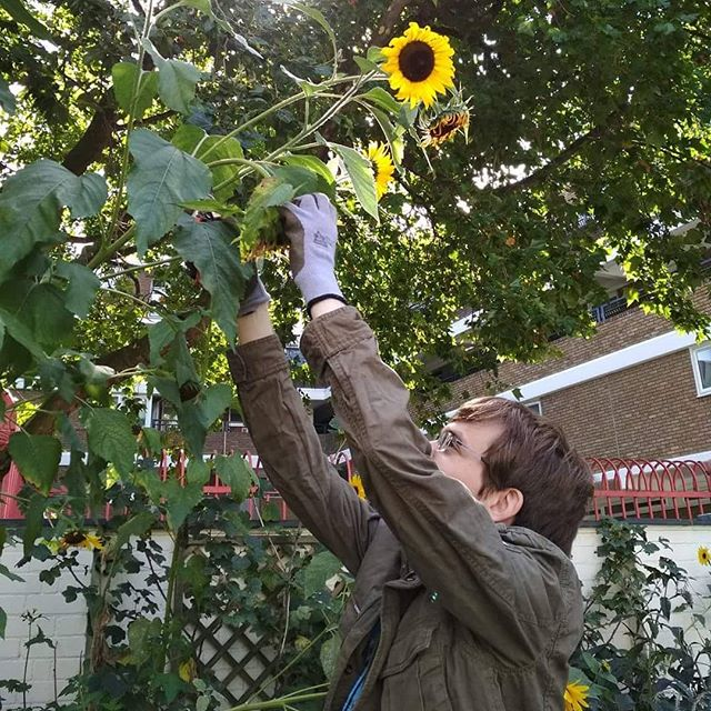 Our London champions have been hard at work alongside Oasis Green Gym Gardening Group, maintaining an awesome community garden in the middle of the city... sunflowers and all! 🌻 #causecorpslondon