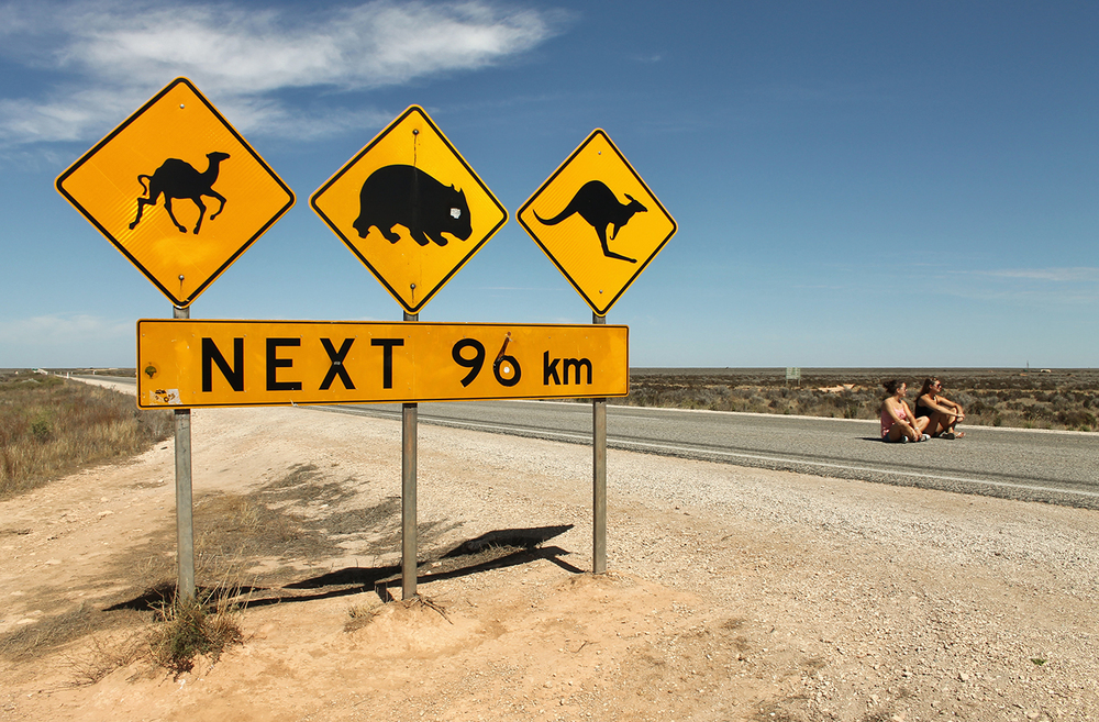 Roadsigns in Australia: camel, wombat, kangaroo - see them all with a WHV