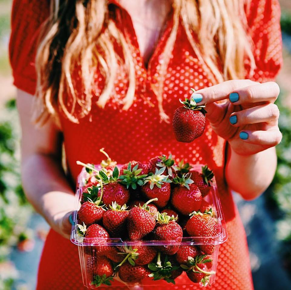 michellejarni🍓 My first time strawberry picking was spent with a camera in one hand for work and strawberries in the other.. whilst stuffing them in my face... 🍓🤤 check out @thestrawberrypick in Echuca get yo strawbs! Features on @urbanlistmelb 'This Incredible Destination Will Cure Your Post-Holiday Blues' look it up for more of my tasty photos! #urbanlisted #melbourne #roadtrip#instatravel #photography #summer#food #foodporn #creative #strawberry#summerfun #holiday #explore#exploretocreate #travel #travelgram#igtravel #wanderlust #colorful#travelling #vscocam #vsco #yummy#sweet #canon #canonaustralia#canon5d