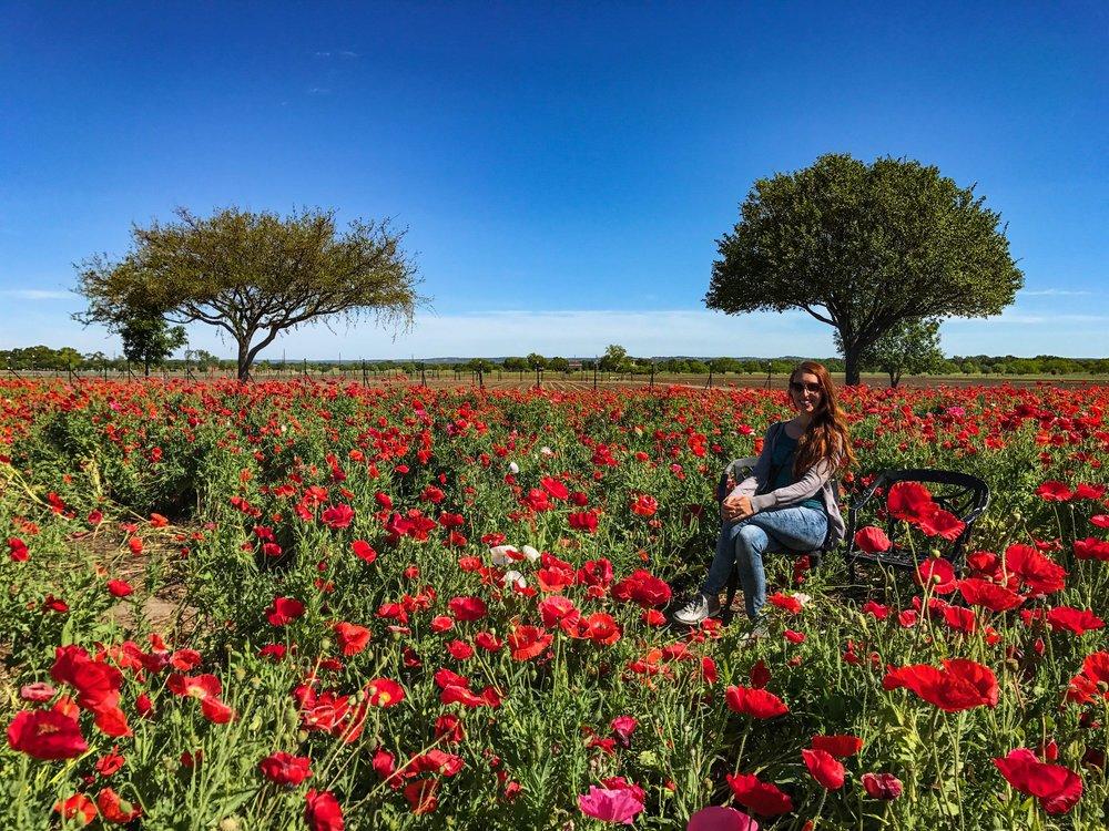 Largest working wildflower farm in the US in Fredericksburg, Texas