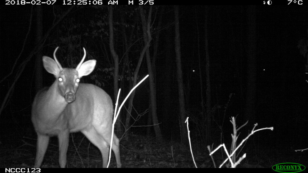 deer.nosy.JPG