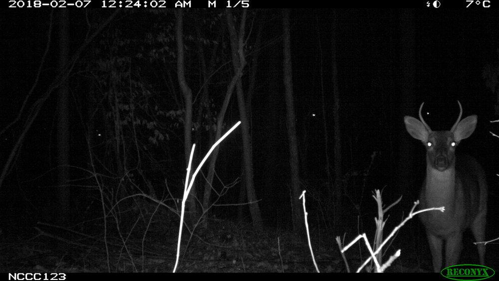 Deer.3.JPG