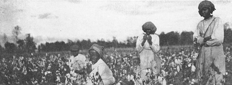 Schomburg Center for Research in Black Culture, Jean Blackwell Hutson Research and Reference Division,  The New York Public Library . (1915).  Windsor plantation; [View of African American women working in the cotton field.]