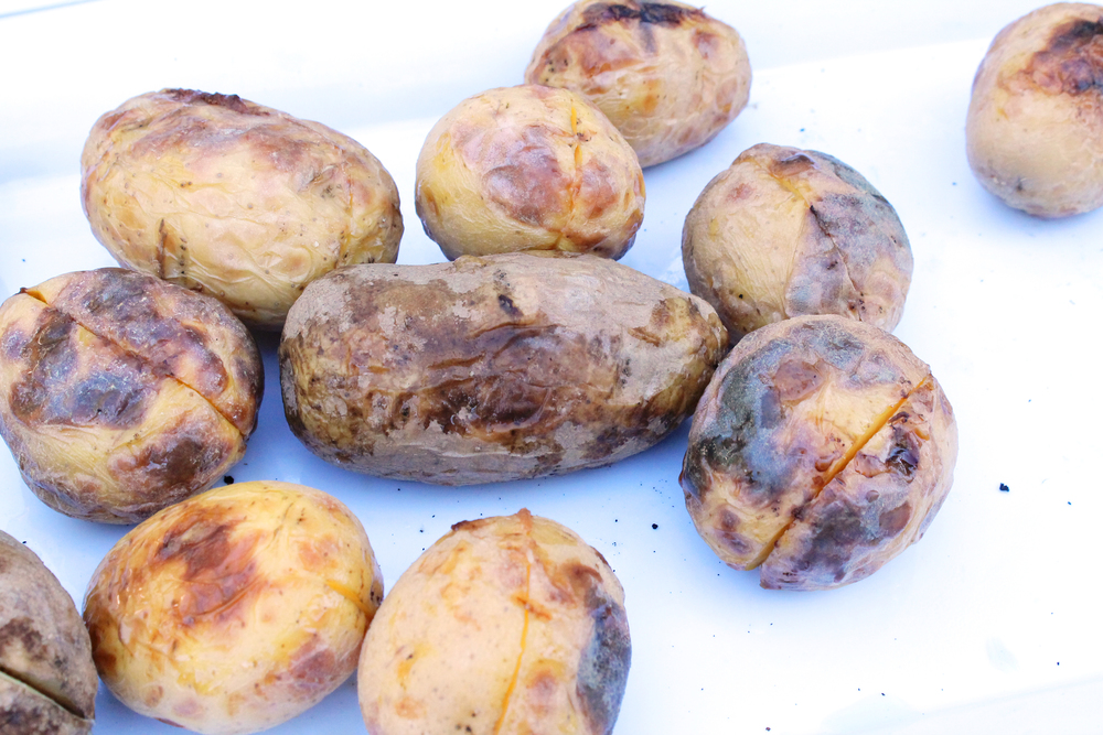 We slow roasted potatoes and then doused in good olive oil with lots of salt and pepper.