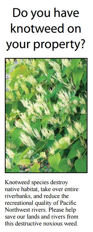 "PDF version of our knotweed brochure, covering four knotweed species that are Class B noxious weeds. It provides an overview on identification, impacts and control options. Two page handout, 8"" x 14"".  (Spanish)"