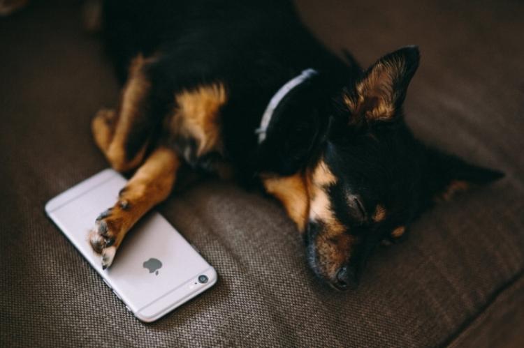 kaboompics_Puppy sleeping with iPhone 6-min.jpg