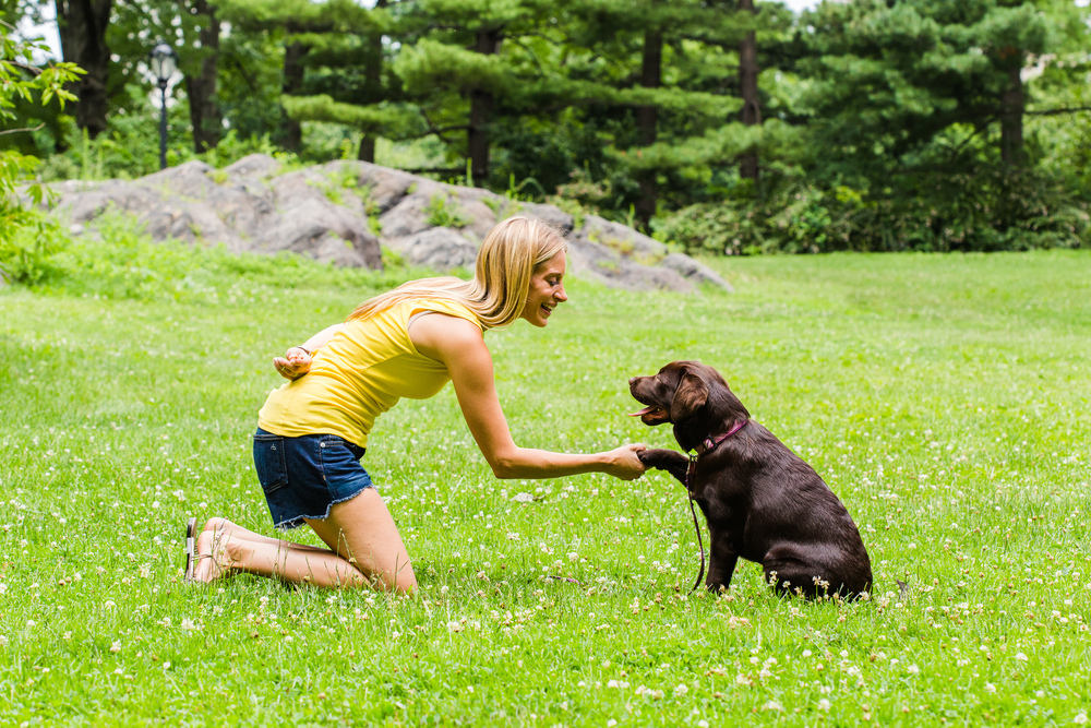 Shelby Semel New York City Dog Training :: Private In-Home Dog Training