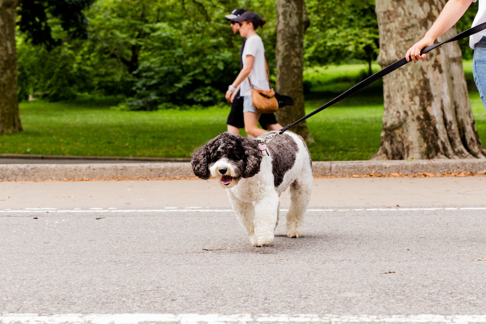 Shelby Semel New York City Dog Training :: Dog Obedience Training