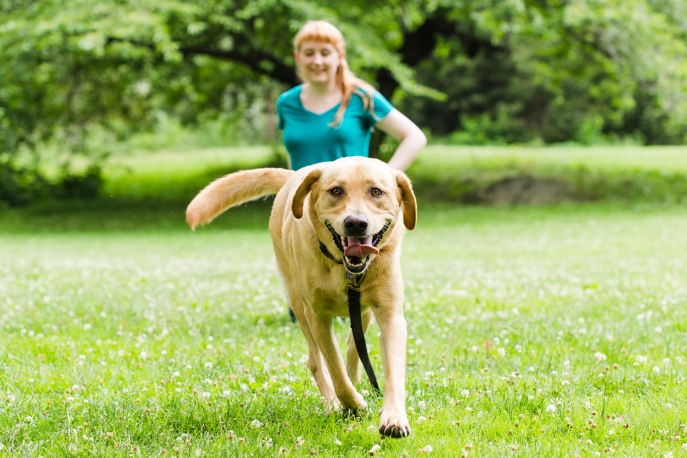 Shelby Semel New York City Dog Training :: Dog Training Classes