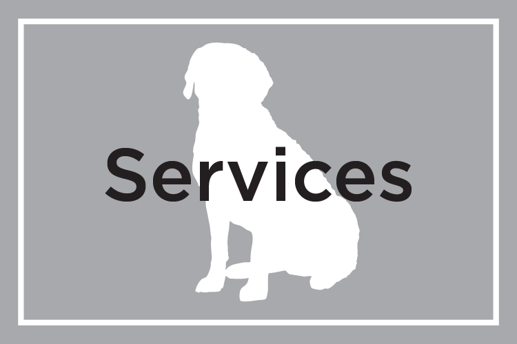 Shelby Semel Dog Training :: Services